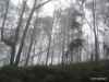 Cloud forest in the mist