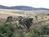 Horton Plains -- Montane grassland