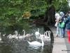 Feeding the swans, St. Stephens Green, Dublin