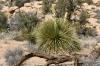 Joshua Tree N.P. -- Hidden Valley