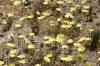 Joshua Tree N.P. -- Wildflowers