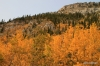 Fall colors, foothills of Kananaskis country.