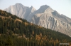 Larches in fall color, Highwood pass.