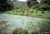 Kandy -- Peradeniya Botanical Gardens