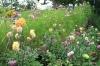 Cominco Gardens, Kimberley
