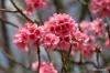 Waimea, blossoms