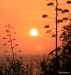 Sunset, South of Kona