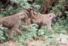 Baboons -- Lake Manyara