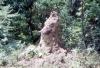 Termite Mound -- Lake Manyara