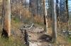 Trail through burned out area, Lake Minnewanka