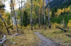 Fall colors, Lake Minnewanka