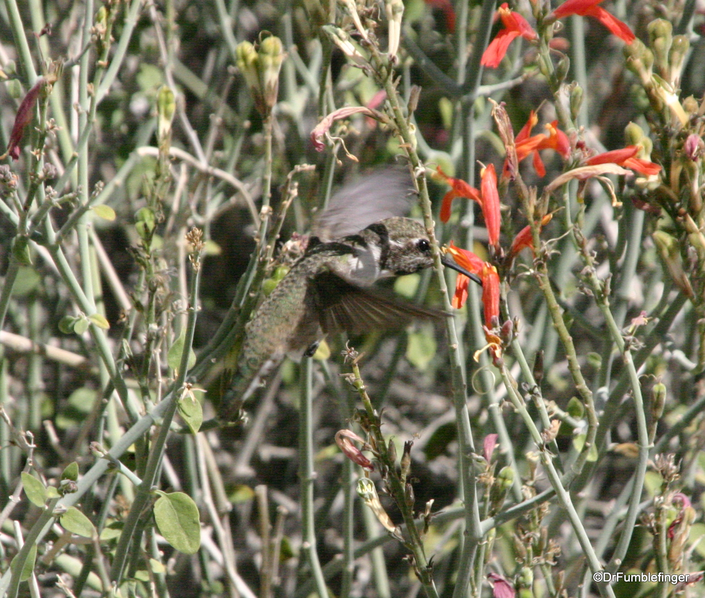 Living Desert Museum. Palm Desert. Hummingbird