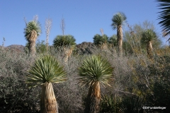 Living Desert Museum. Palm Desert