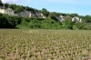 Vineyards and caves, Loire Valley