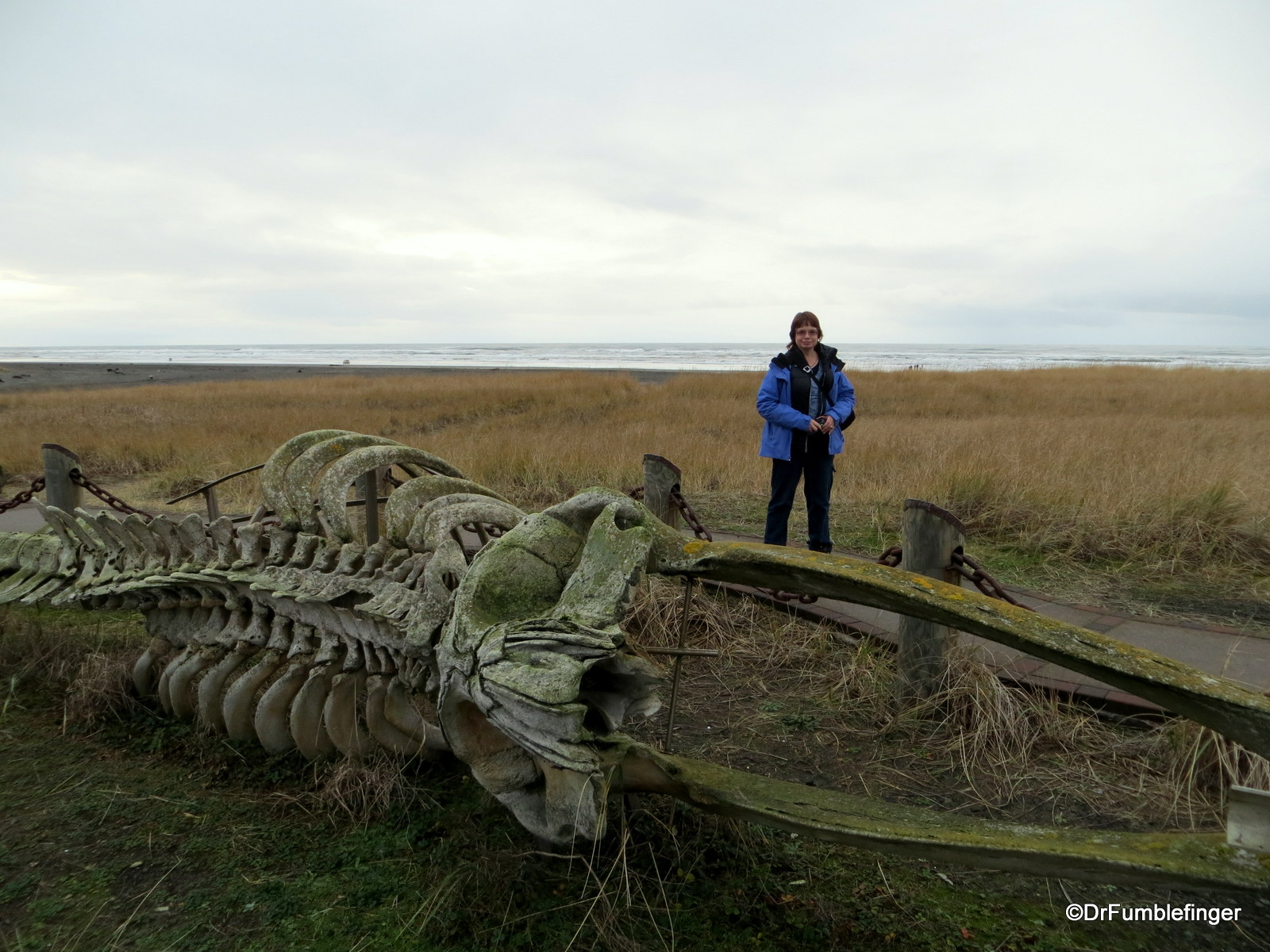 Gray whale skeleton, Discovery Trail