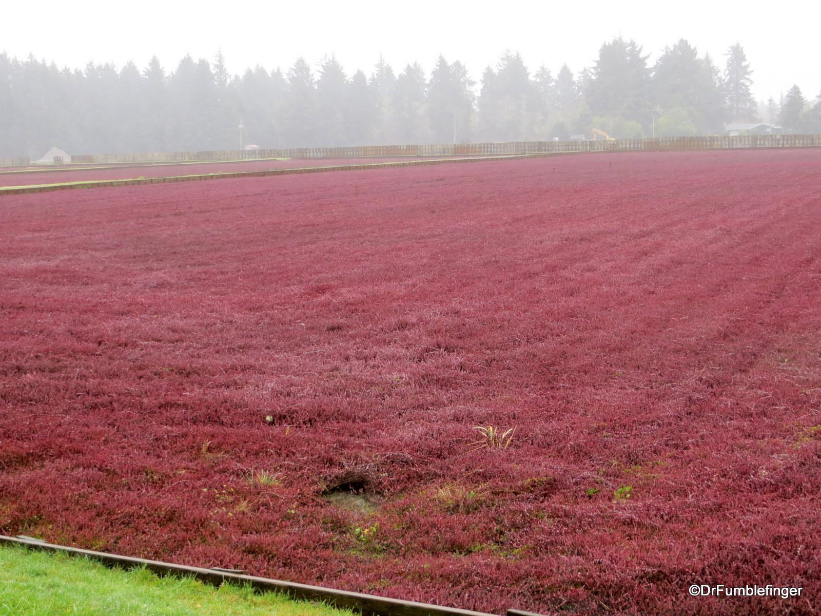 Cranberry Bog, Long Beach, Washington