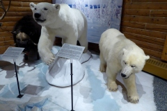 Polar Bears, MacBride Museum, Whitehorse