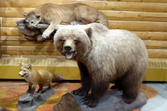 Grizzly Bear, MacBride Museum, Whitehorse