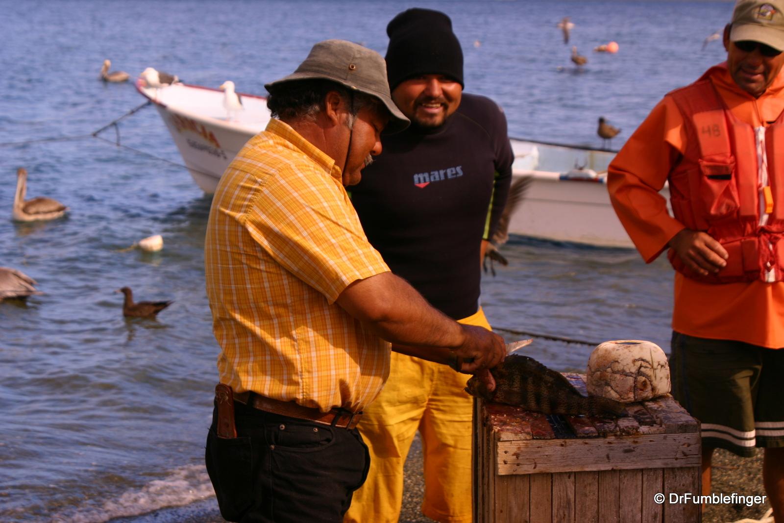 Fisherman cleaning fish, Puerto Magdalena