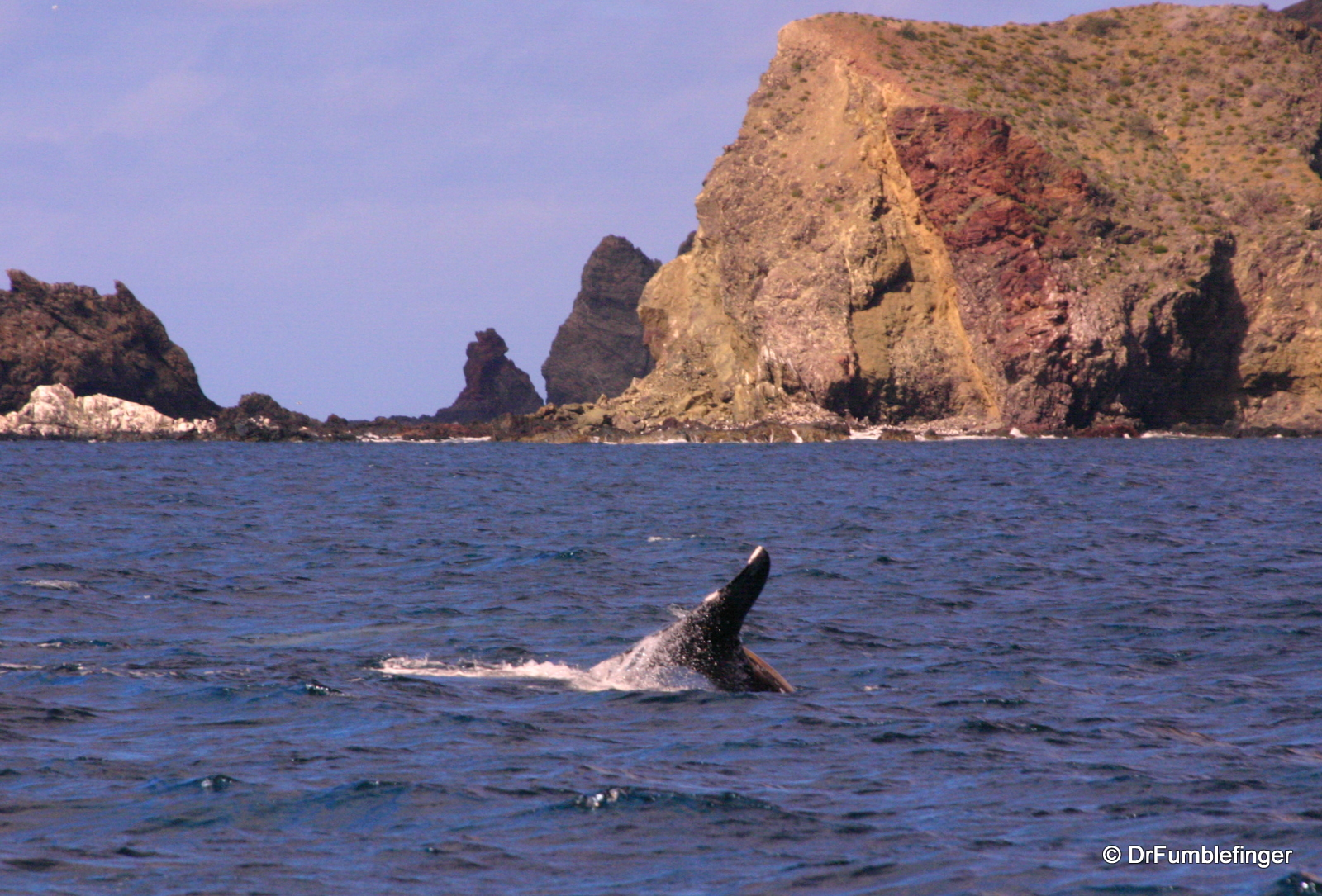Gray whale tail, Magdalena Bay