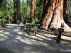 Bachelor and Three Graces, Mariposa Grove, Yosemite National Park.