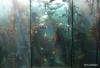 Two Oceans Aquarium, Cape Town, South Africa