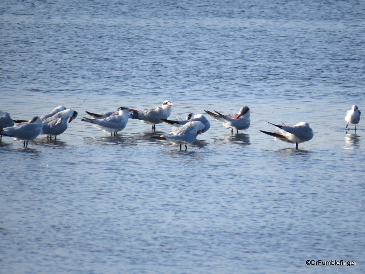 Merritt Island National Wildlife Refuge.