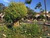 Mission San Juan Capistrano.  Courtyard and fountain