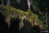 Epiphytes in rainforest
