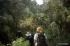 Hiking in rainforest