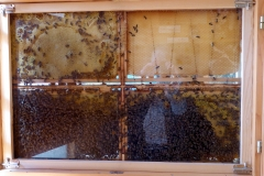 Bee-hive, Museum of Apiculture, Radovljica, Slovenia