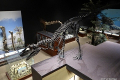 Dinosaur exhibits, Museum of the Rockies, Bozeman
