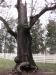 Broken tree adjoining house