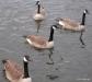 Lake Watauga, Centennial Park