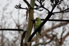 Parrot, Orto Botanico, Palermo