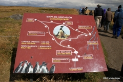 Map of the Otway Penguin Colony