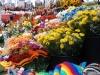 Ottawa -- Byward Market flowers