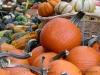 Byward Market Thanksgiving display