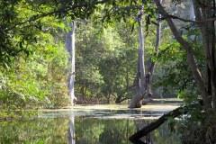 Swamp, Panna Tiger Reserve
