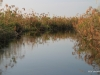 A channel of the Okavango Delta, framed by papyrus