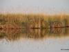 Reflections of the Okavango Delta, Botswana