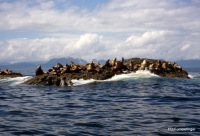 Seal Rock, B.C.