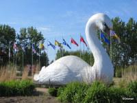 Swan Valley Swan
