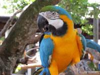 Macaws, Florida