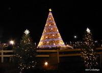 National Christmas Tree, DC