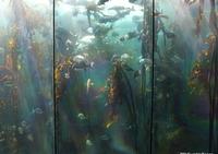 Aquarium, Cape Town
