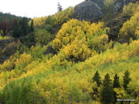 Fall Colors, Colorado
