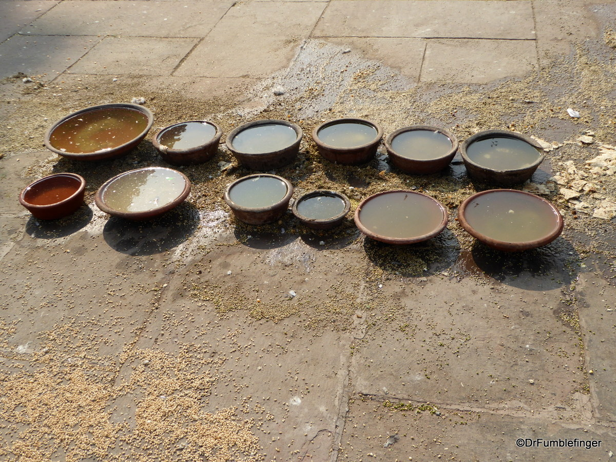 Water for the Pigeons at Jama Masjid, Delhi