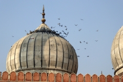 Pigeons at Jama Masjid, Delhi