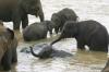Baby elephants in Pinnawala